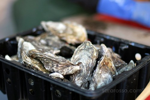 Fresh Oysters at Temple Bar Food Market in Dublin, Ireland