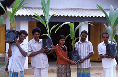 Group of people with seedlings to be planted