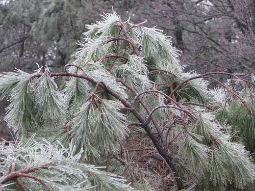 snow day 025