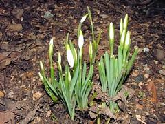 Spring ** voorjaar