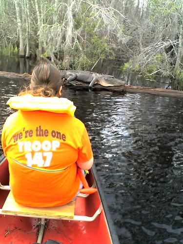 Tommy floats toward an alligator.