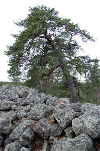 Skansberget vid Stenby