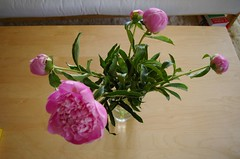 Peonies - Day 2