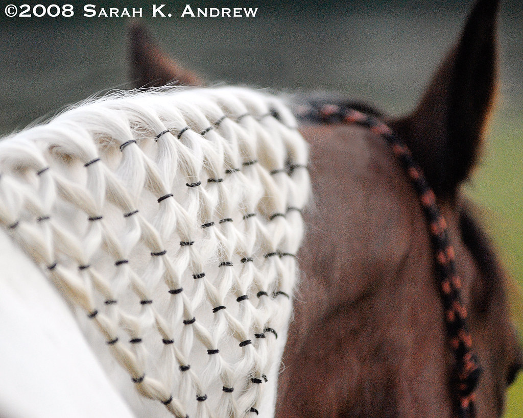 The Worlds Best Photos Of Horse And Macrame Flickr Hive