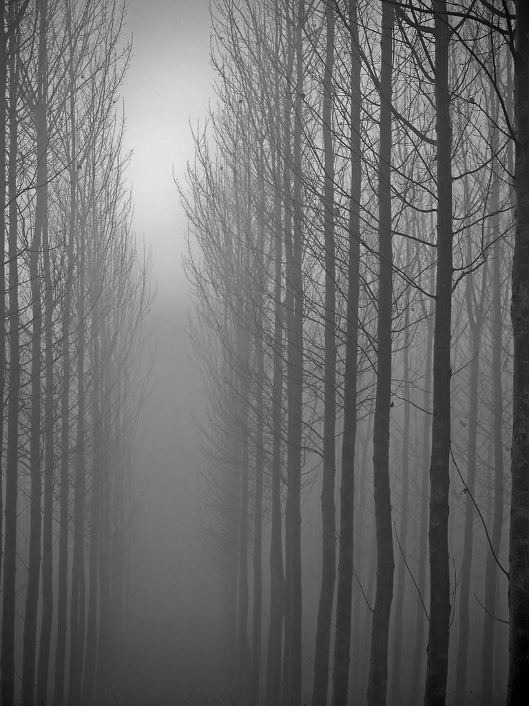 مسیر مه زده