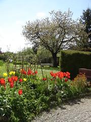 Un jardin au printemps