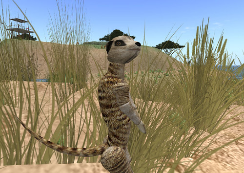 AI Meerkat at Virtual Africa