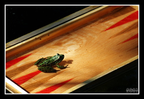 Backgammon toad