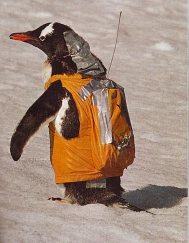 backpack gentoo by R.W.W.