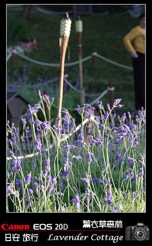 LavenderCottage_0120