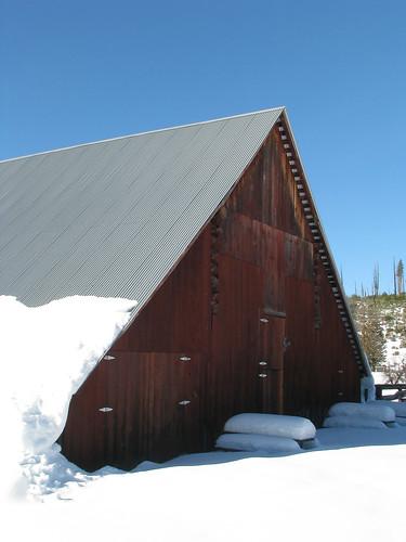 Day 06 - Foresta Barn 3