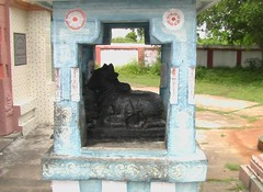 Nandhi getting ready for Pradhosham