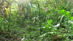 Der Hintere Teil. Was ist Vanille, was ist Dschungel?