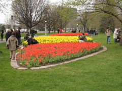 Canadian Tulip Festival - Commissioners Park 3
