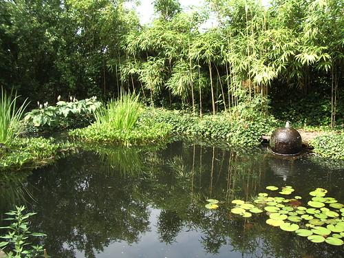 Aah, pond.