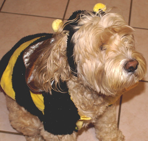 Bee-scuit