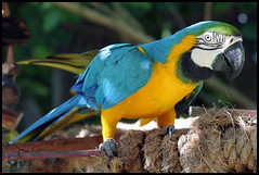 Bahamas Zoo
