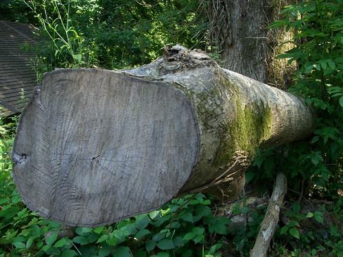 Torso tree