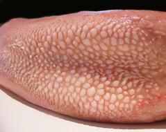 Close Up Veal Tongue