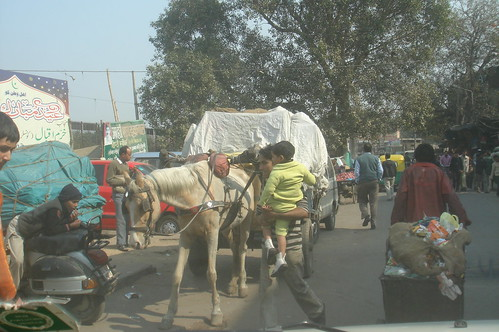 Old Delhi 1-11 馬�在大街上運貨