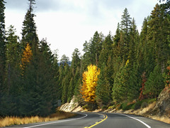 fall colors by Ambrosia_apples