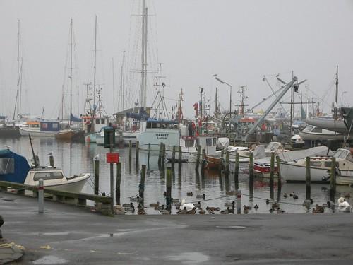 Harbour in Dragør