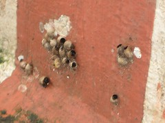 The seeds are sticking even to the base of the cement platform