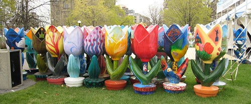 Some of the 150 five-foot tulips created for the 150 years anniversary of Ottawa