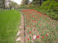 Canadian Tulip Festival - Commissioners Park 8