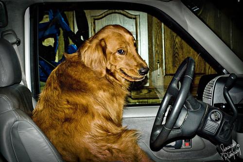 bruce driver 2