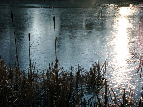 Bullrushes and Frozen Loch