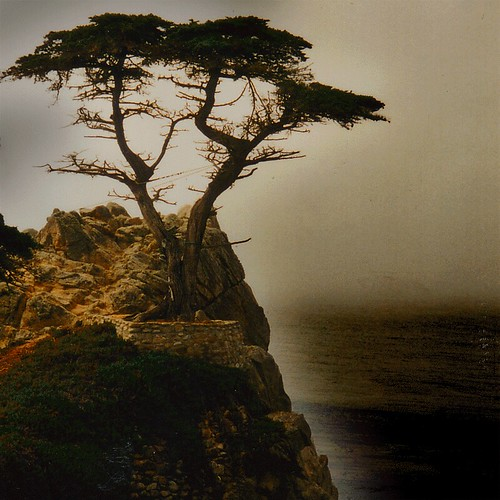 Pebble Beach Lone Cypress USA by :-) carpe diem !...... internet in february.