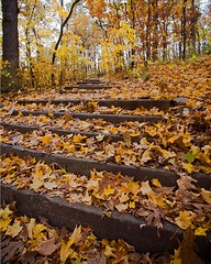 Stairs In The Woods