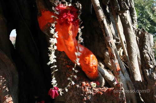 Ganesha found in a tree