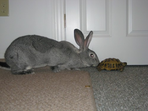 Tortoise and the hare by Flickr user Bad Rabbit, Inc.