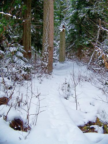 USFS trail # 223.