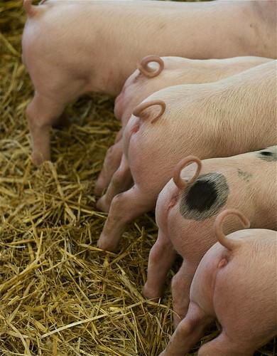 Little piggy bottoms (by rutty)