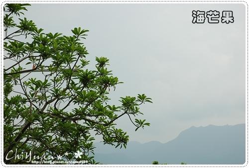 DSC_9368海芒果