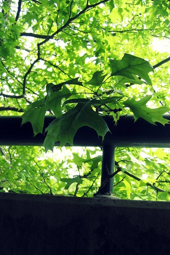 Greenness comes from a window