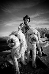 Poodles of Chatham Beach
