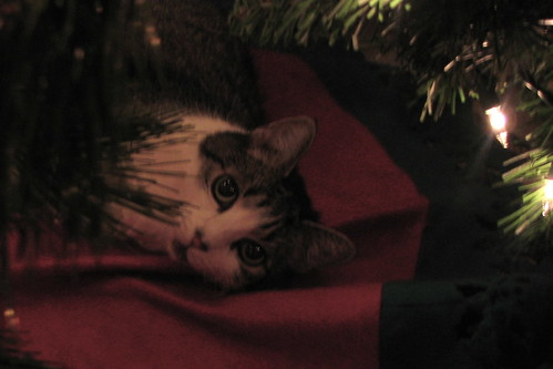 The Christmas Tree Cat