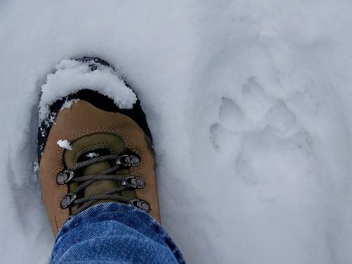 Cat track!