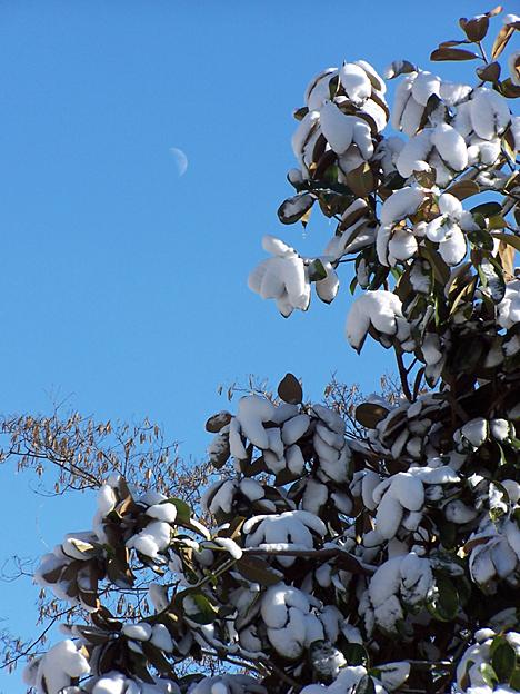 Magnolia, Moon & Snow