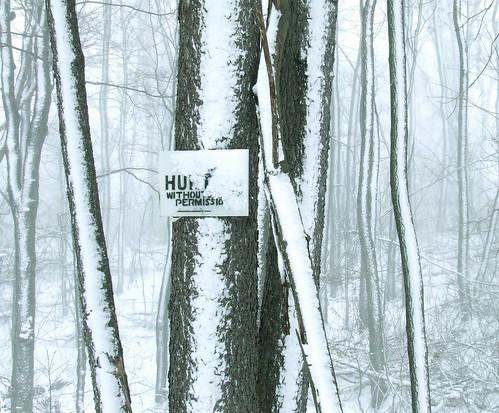 Sapsucker Ridge in a snow storm