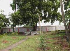 Naval Tree Sthala Vruksham