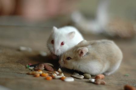 Hamster-04