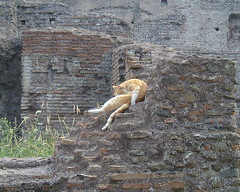 Feral Roman Cats In Ruins
