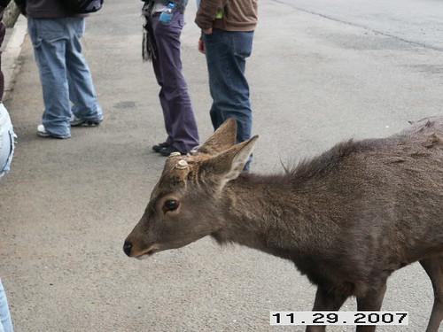 Mean old deer