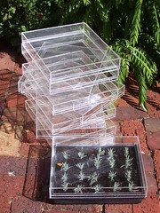 Lids for Propagating Trays