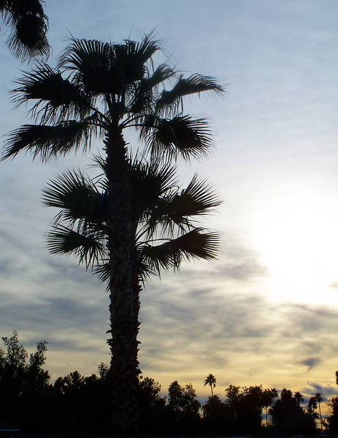 sunset palm.jpg